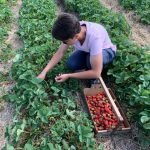 Me, strawberry picking.